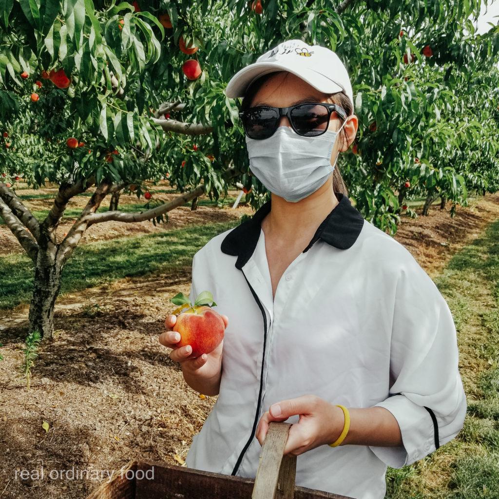 peach picking at dutchyn farm in niagara-on-the-lake