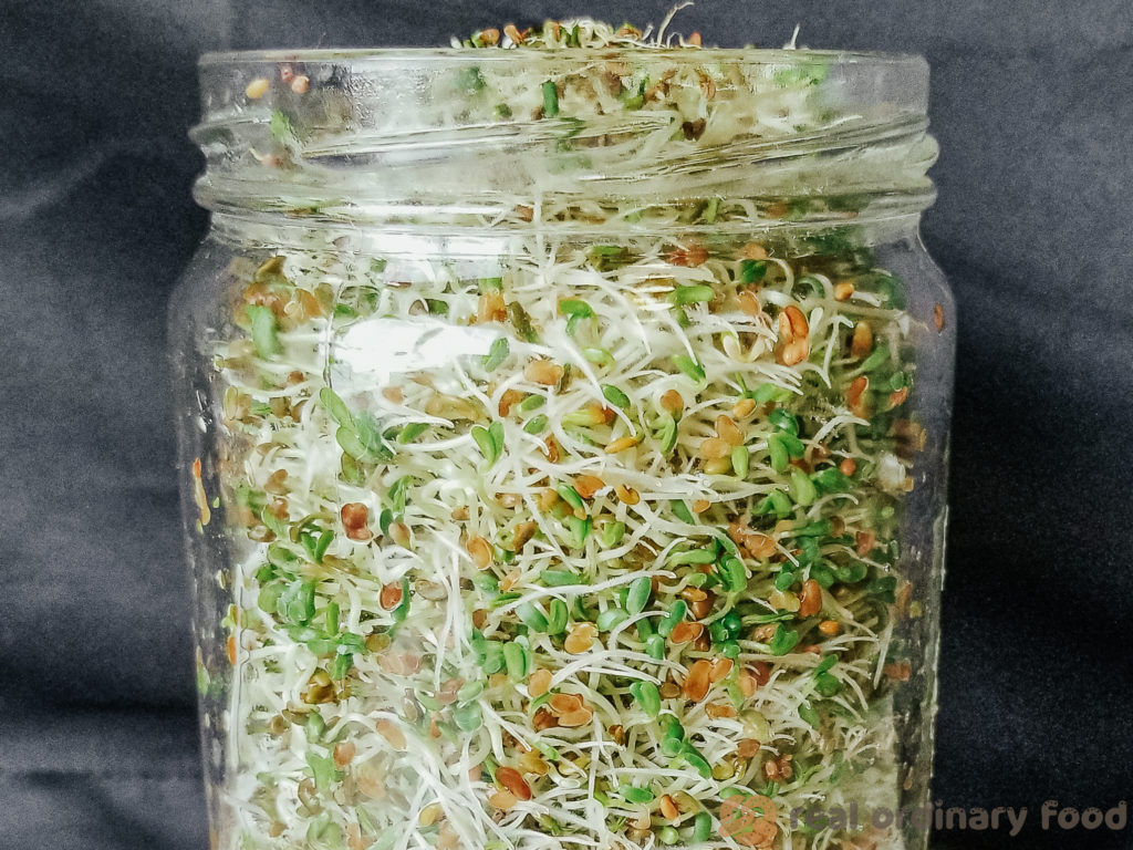 mason jar of alfalfa sprouts